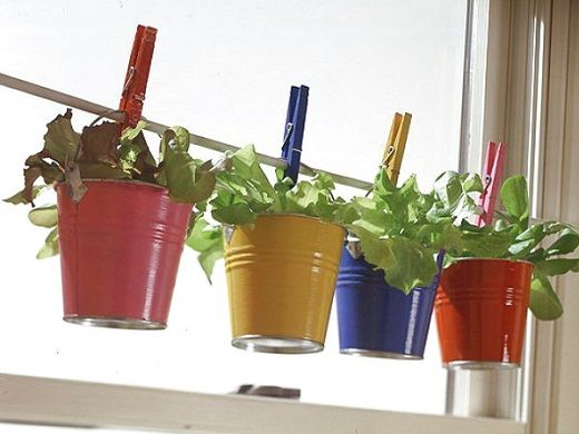 креативность выращивания цветов на кухне