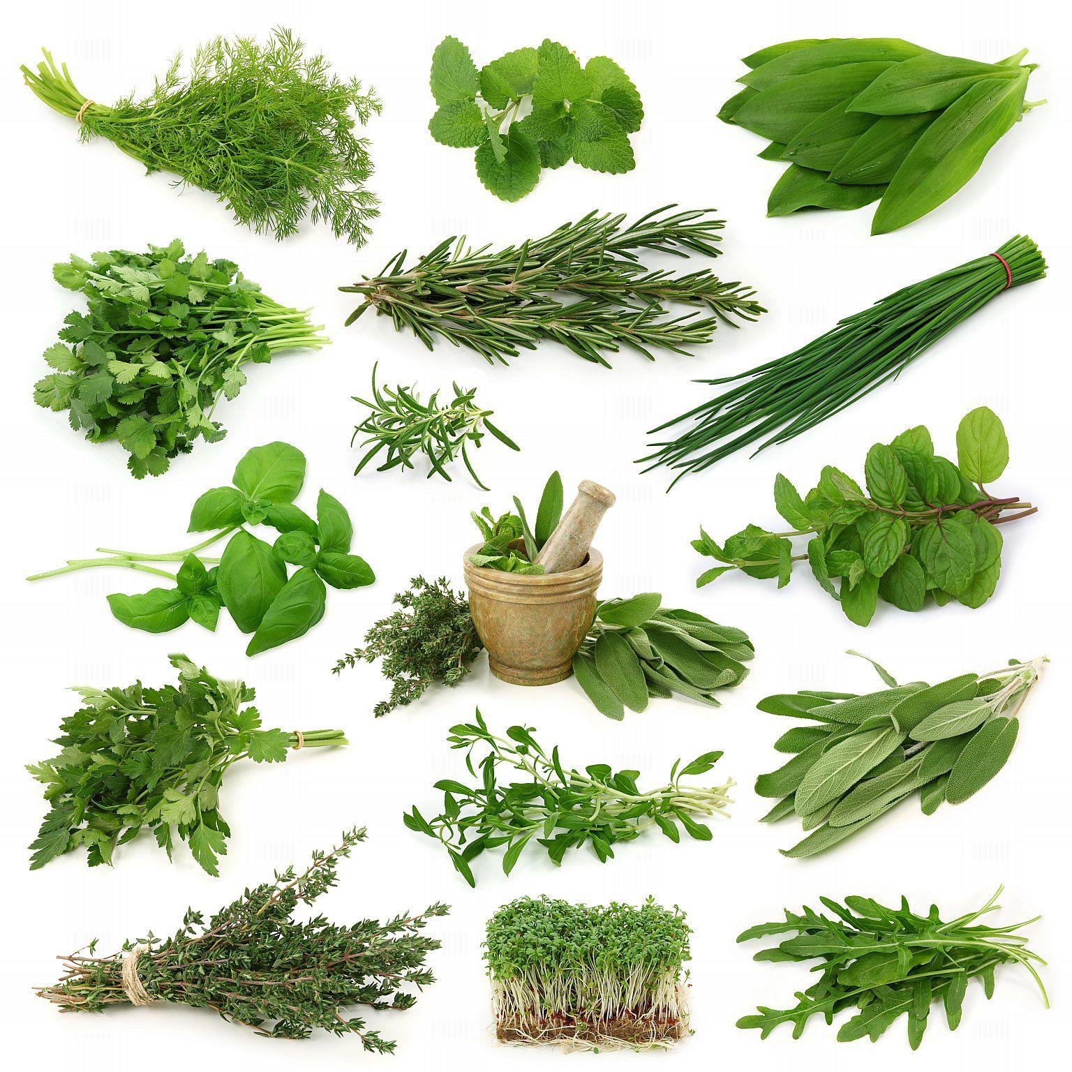 пряные травы для интерьера кухни