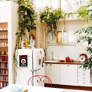 Комнатные цветы, яркие овощи и пряные травы на кухне: живой декор с пользой для здоровья
