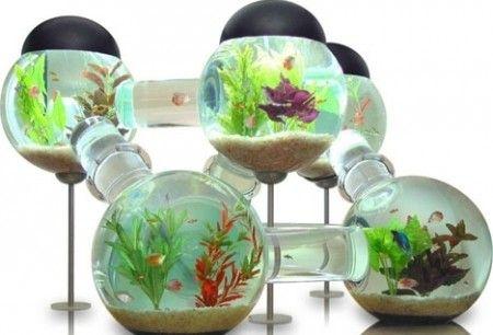 необычный аквариум дома