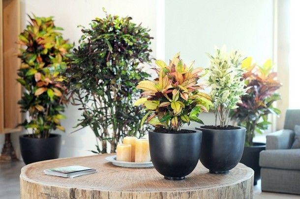 Цветы для кухни на любой вкус