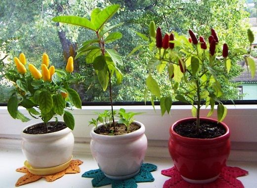 выращивание приправ на кухне