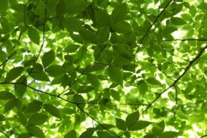Полезные хлоропласты в хлорофиле на службе здоровья и красоты