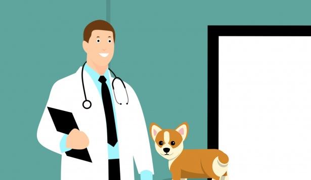 «Вита» – пожалуй, самая лучшая ветеринарная клиника Ростова-на-Дону