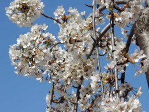 Весна в интерьере